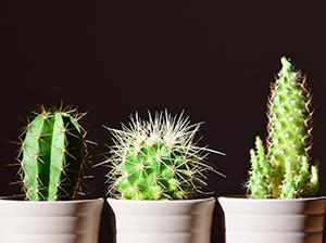 Floristería Yedra Santander Cactus